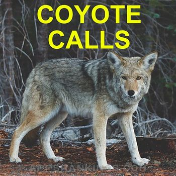 Coyote Calls for Predator Hunting Coyote app reviews and download