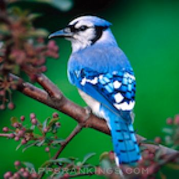 Birds Songs App, ornithology app reviews and download